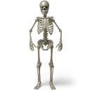 128x128px size png icon of Standing skeleton