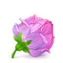 128x128px size png icon of Box 22 Rose Pink