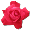 128x128px size png icon of Rose Cerise