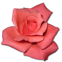 128x128px size png icon of Rose Coral