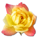 128x128px size png icon of Rose Yellow 2