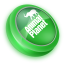 128x128px size png icon of Animal Planet