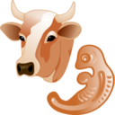 128x128px size png icon of Cow embryo