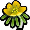 Winter Aconite Icon