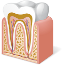 128x128px size png icon of Body Tooth Anatomy