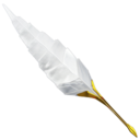 128x128px size png icon of Plume old school