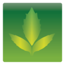 128x128px size png icon of leaves