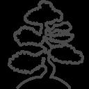 128x128px size png icon of bonsai