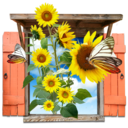 128x128px size png icon of Flowers Sunflowers Window