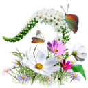 128x128px size png icon of Flowers Wildflowers