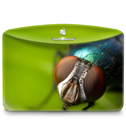 256x256px size png icon of Folder Nature Insect