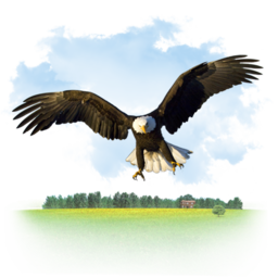 256x256px size png icon of Animals Eagle