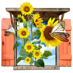 256x256px size png icon of Flowers Sunflowers Window