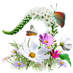 256x256px size png icon of Flowers Wildflowers