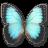 48x48px size png icon of Morpho Peleides Montezuma