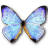 48x48px size png icon of Morpho Sulkowski Pearl Morpho