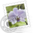 48x48px size png icon of Orchid