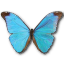 64x64px size png icon of Morpho Absoloni