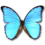 64x64px size png icon of Morpho Didius