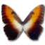 64x64px size png icon of Morpho Hecuba sunset