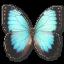 64x64px size png icon of Morpho Peleides Montezuma