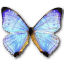 64x64px size png icon of Morpho Sulkowski Pearl Morpho