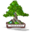 64x64px size png icon of Bonsai Final