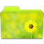 64x64px size png icon of Folder Sunflower