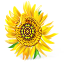 64x64px size png icon of Sunflower