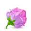 64x64px size png icon of Box 22 Rose Pink