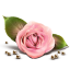 64x64px size png icon of Rose