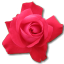 64x64px size png icon of Rose Cerise