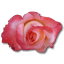 64x64px size png icon of Rose China