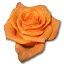 64x64px size png icon of Rose orange 2