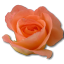 64x64px size png icon of Rose peach 2