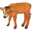 64x64px size png icon of Calf