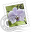 64x64px size png icon of Orchid