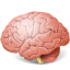 64x64px size png icon of Body Brain