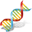 64x64px size png icon of Body DNA