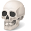 64x64px size png icon of Body Skull