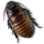 64x64px size png icon of Caca Roach