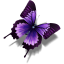 64x64px size png icon of Other Butterfly