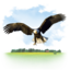 64x64px size png icon of Animals Eagle