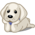 72x72px size png icon of dog labrador