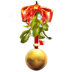 72x72px size png icon of mistletoe