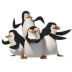 72x72px size png icon of Penguins