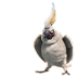 72x72px size png icon of Nigel