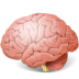 72x72px size png icon of Body Brain