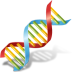 72x72px size png icon of Body DNA