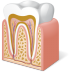 72x72px size png icon of Body Tooth Anatomy